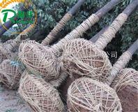 带土球的苗木移栽机 提高成活率挖树机