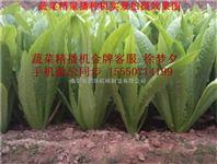 蔬菜大棚精密播种机 单粒菜籽种植机厂家