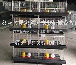 育雏笼-河南省宏盛立式育雏笼专业定做各种笼子批发
