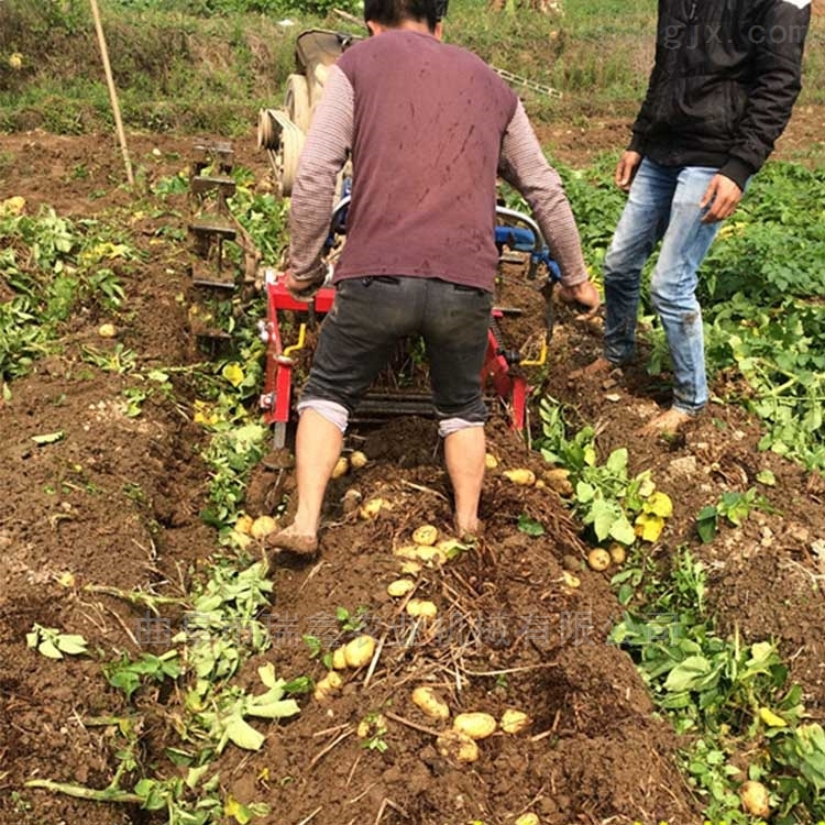 土豆挖薯机价格 高速手扶车带土豆收割机