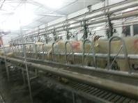 羊台式奶羊挤奶厅|羊用挤奶设备