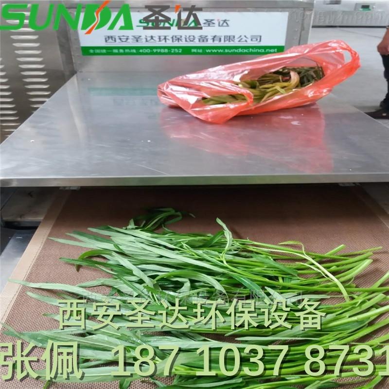 大棚蔬菜用微波杀青干燥 产量高 效率快