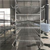 厂家供应层叠蛋鸡笼 自动化养鸡设备