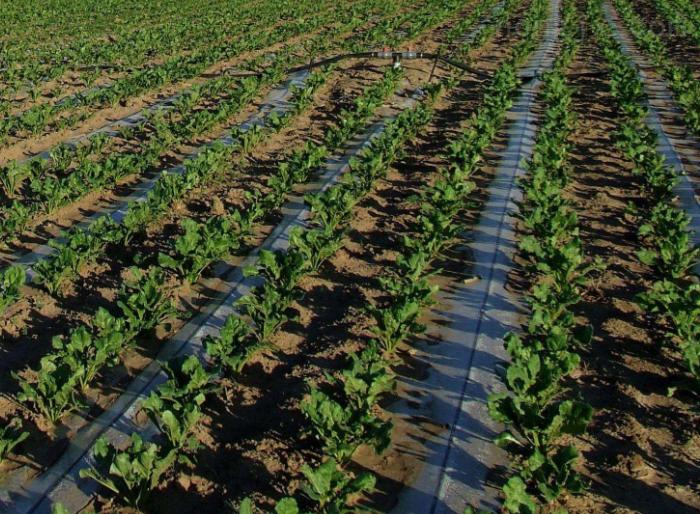 新乡市蔬菜滴灌生产厂家
