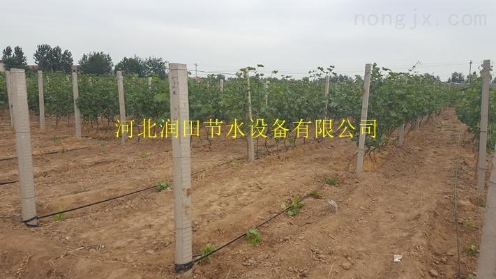 吕梁市石楼县土豆膜下滴灌-贴片迷宫式滴灌带生产厂家
