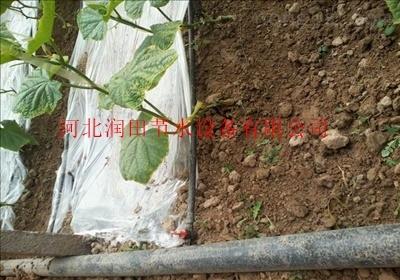 四川合江县滴灌带厂家优质厂家