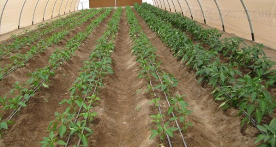 四川滴灌带厂家灌溉滴灌带厂家直销
