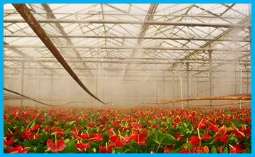 花卉大棚增溫設備?