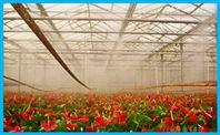 温室大棚专用加湿器 花卉养殖加湿设备