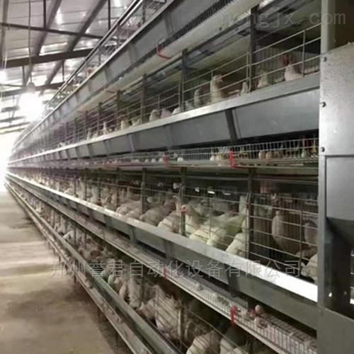 鸡笼蛋鸡笼肉鸡笼阶梯笼层叠笼