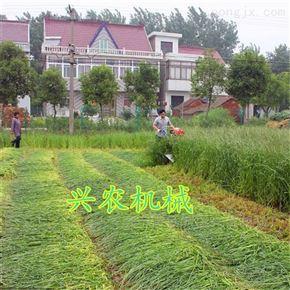xnjx-100手推式辣椒收割机多用芦苇放片机