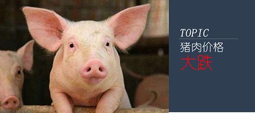 猪肉大跌价!生猪养殖行业洗牌在即
